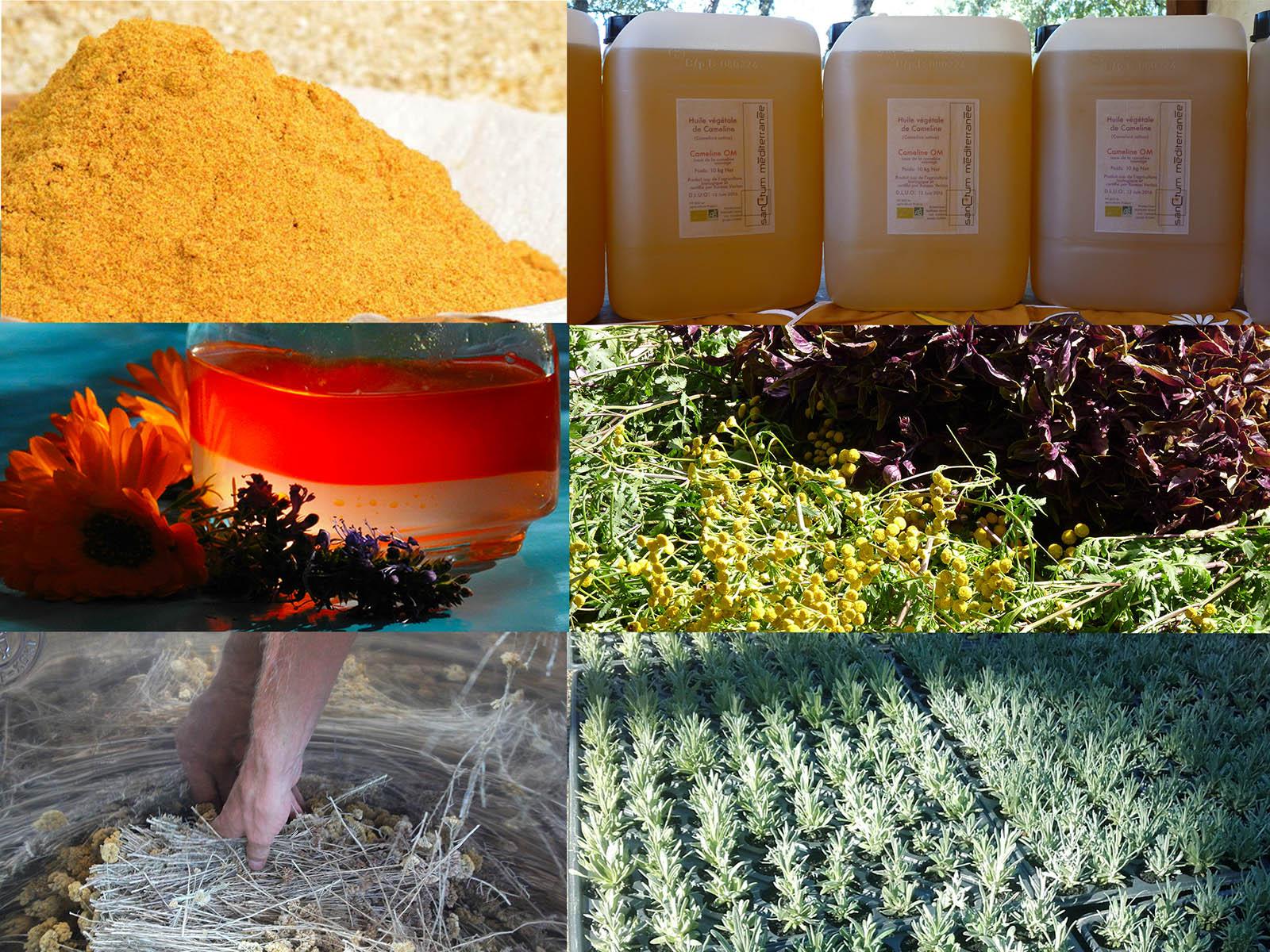 exemples de produits proposés par sanCtum méditerranée : plans, semences, farines, huiles